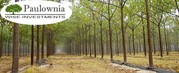 Forestry business for sale. Buy Bulgarian company with land and trees.