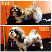 Dog Grooming Service for your Cute Puppies in Dublin