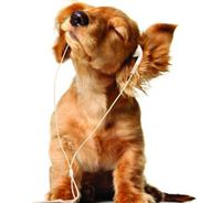 Dog Grooming Service in Dublin - Fetch Grooming