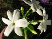 Special/rare garden plants Sale Dalkey. For Medicins sans Frontiers