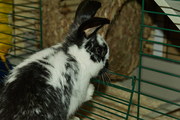 free male rabbit needs a new home