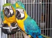 potty trained macaw parrots.